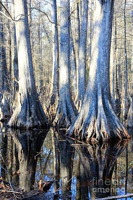 Photograph - Cypress Reflection by Carol Groenen