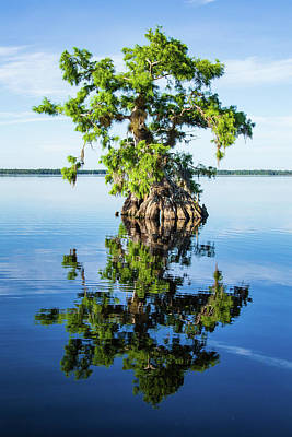 Photograph - Cypress Reflection by Stefan Mazzola
