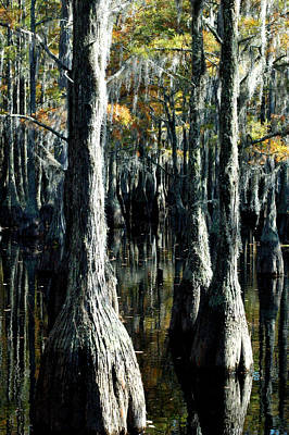 Photograph - Cypress Reflections 4 by David Weeks