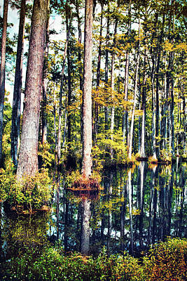 Photograph - Cypress Reflections Fx by Dan Carmichael
