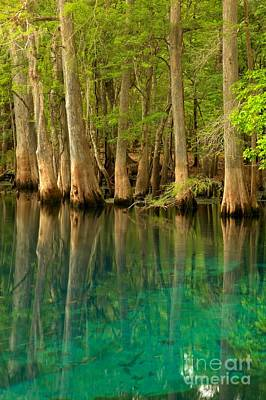Photograph - Cypress Reflections In Blue by Adam Jewell