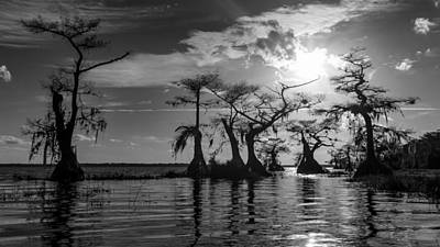 Photograph - Cypress Reflections by Stefan Mazzola