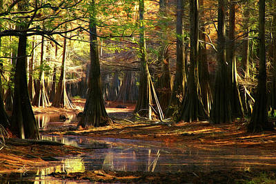Photograph - Cypress Stream by Lana Trussell