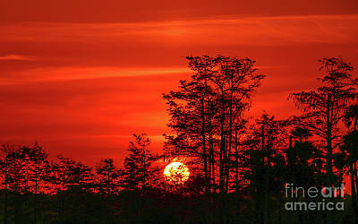 Photograph - Cypress Sunrise #1 by Tom Claud