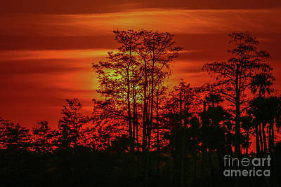 Photograph - Cypress Sunrise #2 by Tom Claud