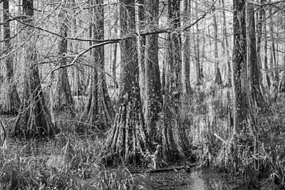 Photograph - Cypress Swamp 07 by Jim Dollar