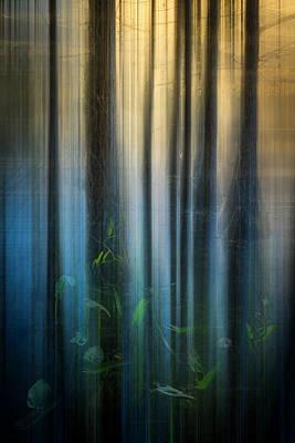 Photograph - Cypress Swamp Dreamscape by Debra and Dave Vanderlaan