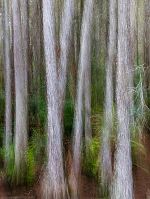 Photograph - Cypress Swamp by John Kearns