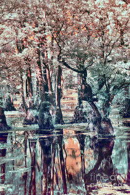 Photograph - Cypress Swamp Land by Dan Carmichael