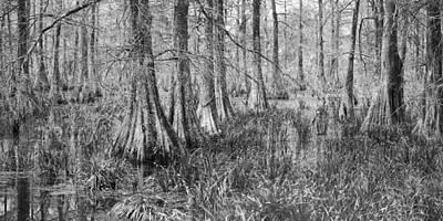 Photograph - Cypress Swamp Panorama 13 by Jim Dollar