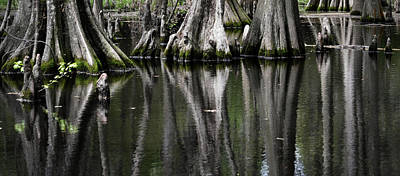 Photograph - Cypress Swamp Reflection by Nadalyn Larsen