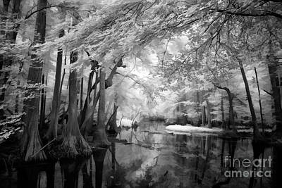 Cypress Swamp Photograph - Cypress Swampland by Dan Carmichael