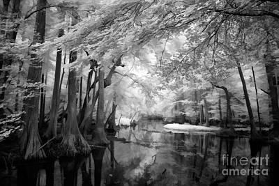 Cypress Swampland Art Print by Dan Carmichael