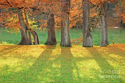 Photograph - Cypress Swing by Robert Anschutz