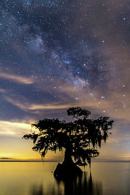 Photograph - Cypress Tree At Night by Stefan Mazzola