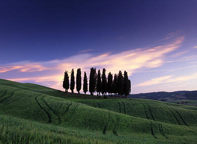Italy Photograph - Cypress Tree Cluster by Michael Hudson
