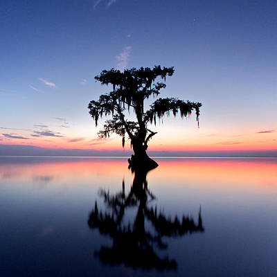 Print featuring the photograph Cypress Tree by Evgeny Vasenev
