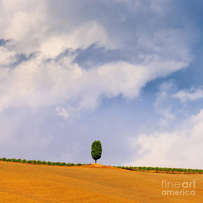 Cypress Tree In Le Crete Senesi In The Tuscany, Italy Art Print by Henk Meijer Photography