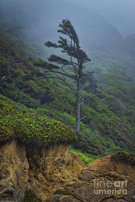 Photograph - Cypress Tree by Mitch Shindelbower