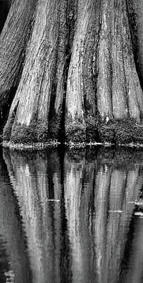 Photograph - Cypress Tree Reflection by Nadalyn Larsen