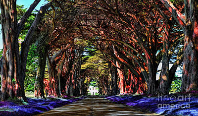 Digital Art - Cypress Tree Tunnel by Jason Abando
