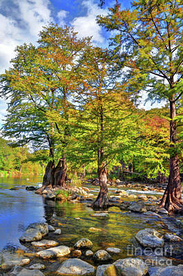 Photograph - Cypress Trees Along The Guadalupe River by Savannah Gibbs