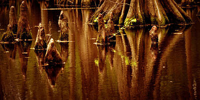 Photograph - Cypress Trees And Bustios  by Nadalyn Larsen