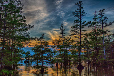 Nature Scape Photograph - Cypress Trees At Sunset by Paul Freidlund