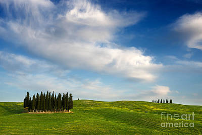 Photograph - Cypress Trees In A Tuscany Landscape by IPics Photography