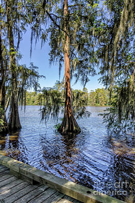 Photograph - Cypress Trees In Tchefuncte River by Kathleen K Parker