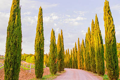 Tree-lined Photograph - Cypress Trees In Tuscany by Ariane Moshayedi