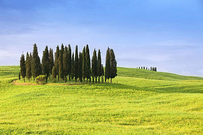 cypress trees in Tuscany Italy Art Print by Ursula Alter