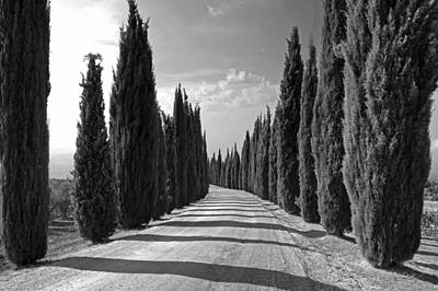 Dirt Roads Photograph - Cypress Trees by Joana Kruse