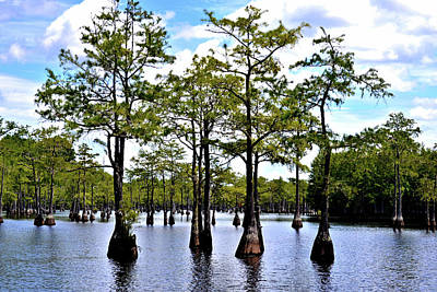 Photograph - Cypress Trees Of Georgia by Tara Potts