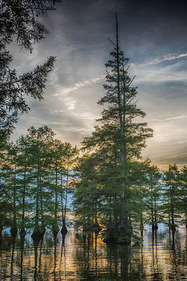 Nature Scape Photograph - Cypress Trees by Paul Freidlund