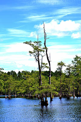 Photograph - Cypress Trees by Tara Potts