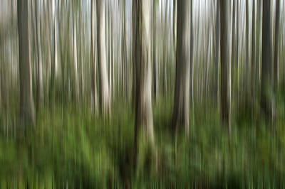 Photograph - Cypress Tress Digital Abstracts Motion Blur by Rich Franco