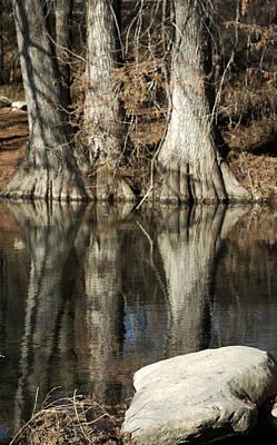 Photograph - Cypress Trunks by Karen Musick