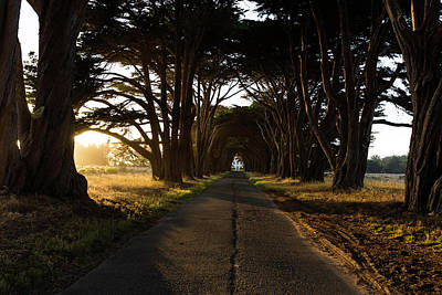 Photograph - Cypress Tunnel At Golden Hour by Scott Cunningham
