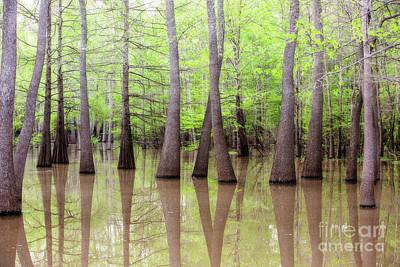 Cypress - Tupelo Swamp North Louisiana Art Print
