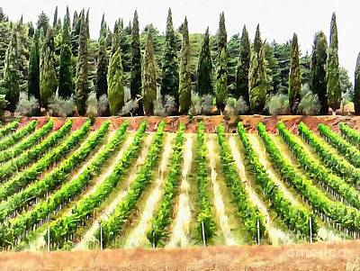 Photograph - Cypresses And A Vineyard In Umbria by Dorothy Berry-Lound