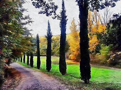 Photograph - Cypresses In Autumn by Dorothy Berry-Lound