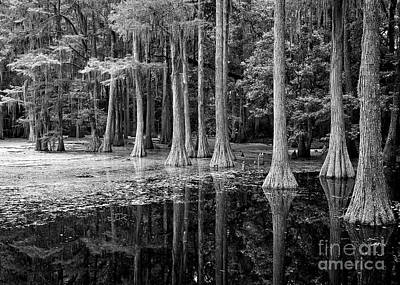 Cypress Knees Photograph - Cypresses In Tallahassee Black And White by Carol Groenen