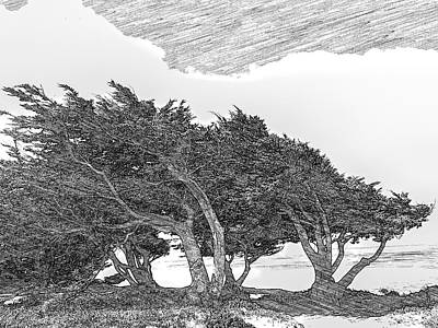 Cypress Tree Drawing - Cypresses by Jonathan Nguyen