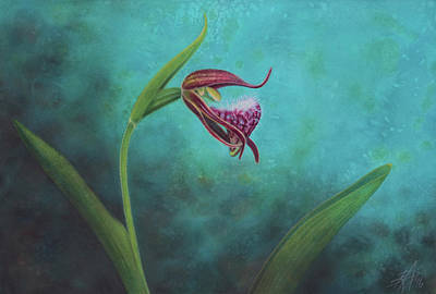 Painting - Cypripedium Arietinum V by Robin Street-Morris