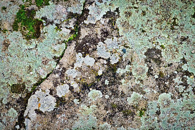 Photograph - Czech Lichen by Stuart Litoff