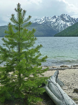 Photograph - D07334-dc Tree And Sawtooths Rising Above Redfish Lake by Ed Cooper Photography