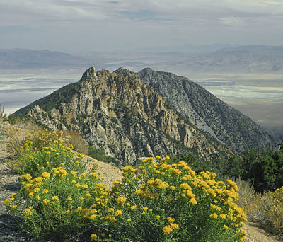 Photograph - D2m6463 Timosea Peak by Ed Cooper Photography