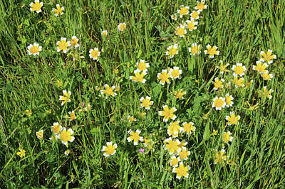 Photograph - D6b6368 Wildflowers In Van Hoosear Preserve by Ed Cooper Photography
