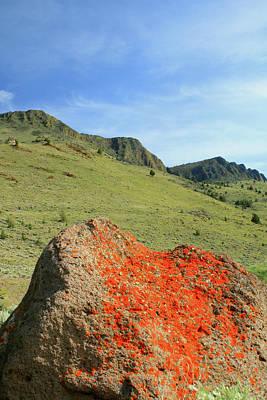 Photograph - Da5872 Lichen Covered Rock Below Abert Rim by Ed Cooper Photography